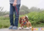 Интерактивная игрушка Peppy Pets Веселая прогулка Бассет 28 см (245277) 0